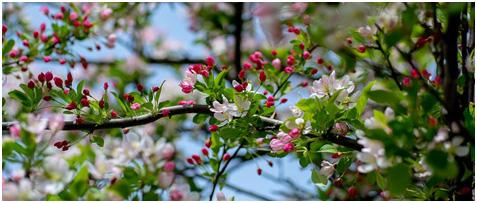 Byłaś piękna jak wiosna