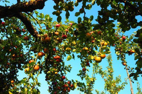 Warzywa, owoce: czy rzeczywiście są zdrowsze?